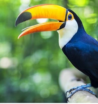 O Exotismo da Natureza no Brasil