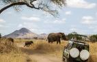 As Melhores Dicas para um Inesquecível Safari em África