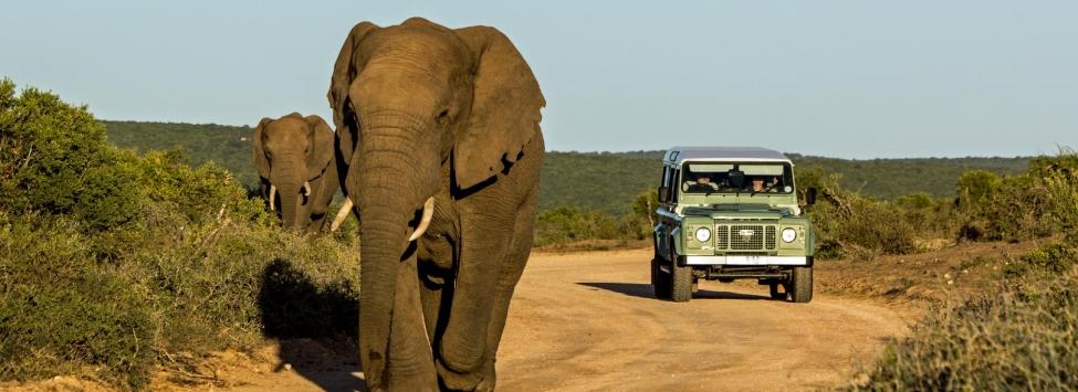 Elefantes na Savana